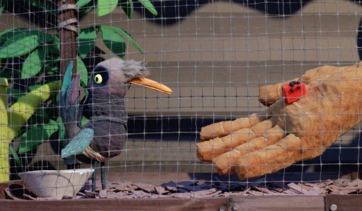 Lep na ptaki / Birdlime
